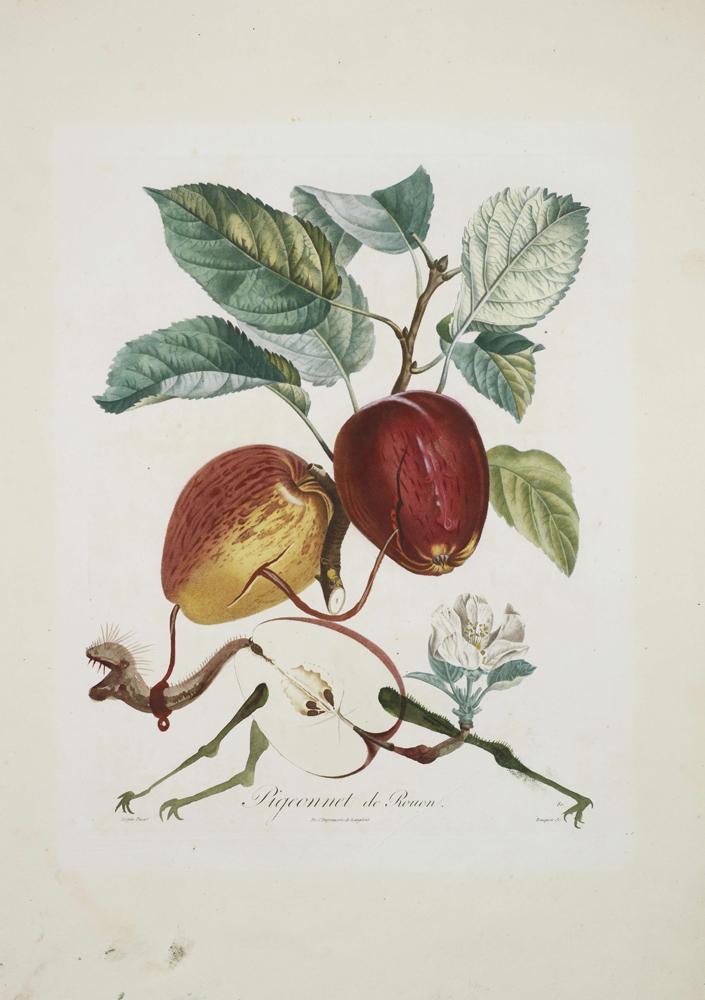 世的达利的植物主题水彩画即将拍卖,我喜欢达利、喜欢水