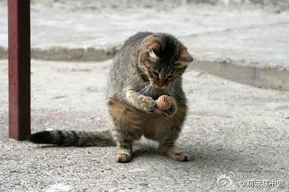 可爱宠物中心:前世是松鼠,今生为猫,更萌了!